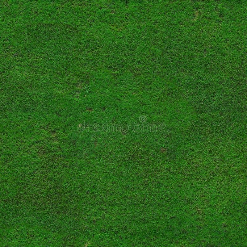 Emprega a textura da grama verde foto de stock royalty free
