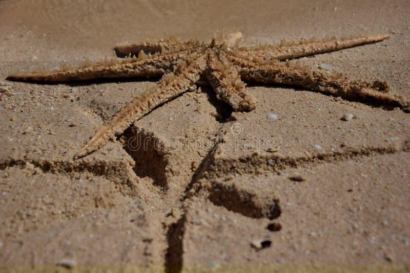 Empreinte de pas d'étoiles de mer photographie stock libre de droits