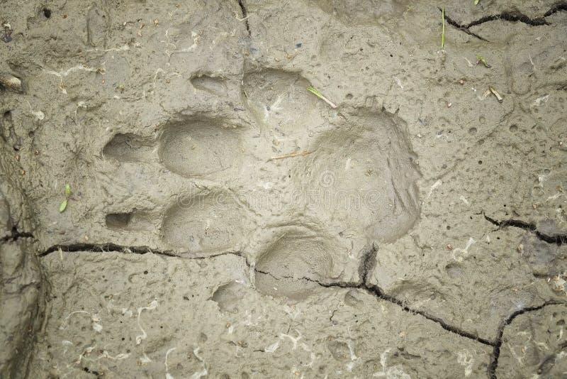 Empreinte de pas de chien en argile images libres de droits