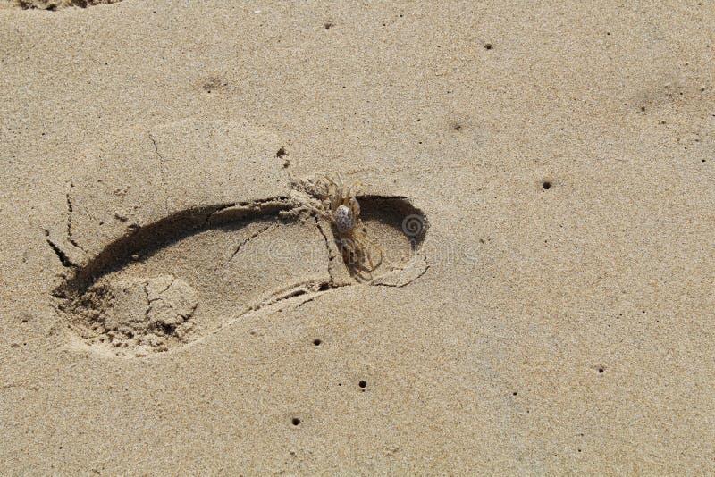 Empreinte de pas de sable de plage de Paradise dans le sable images libres de droits