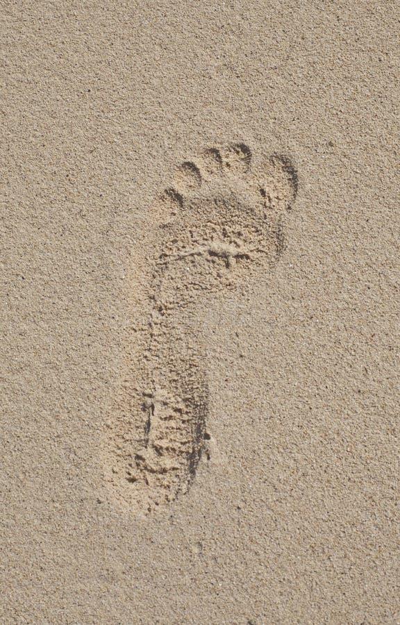 Empreinte de pas sur le sable photo libre de droits