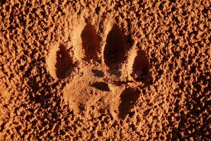 Empreinte de patte de lion image stock image du carnivore 42229657 - Patte de lion ...