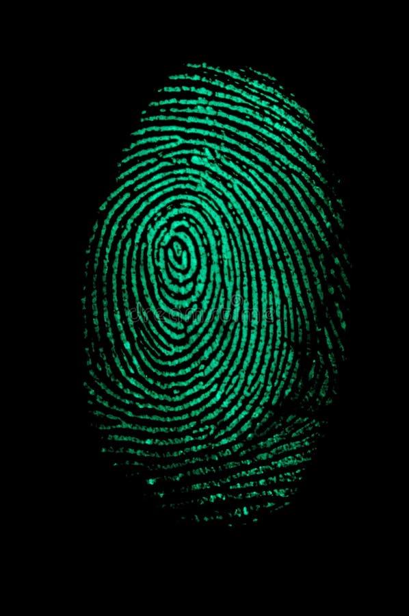 Empreinte digitale verte image libre de droits