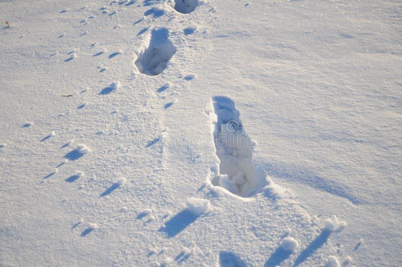 Empreintes de pas à l'arrière-plan de neige image libre de droits
