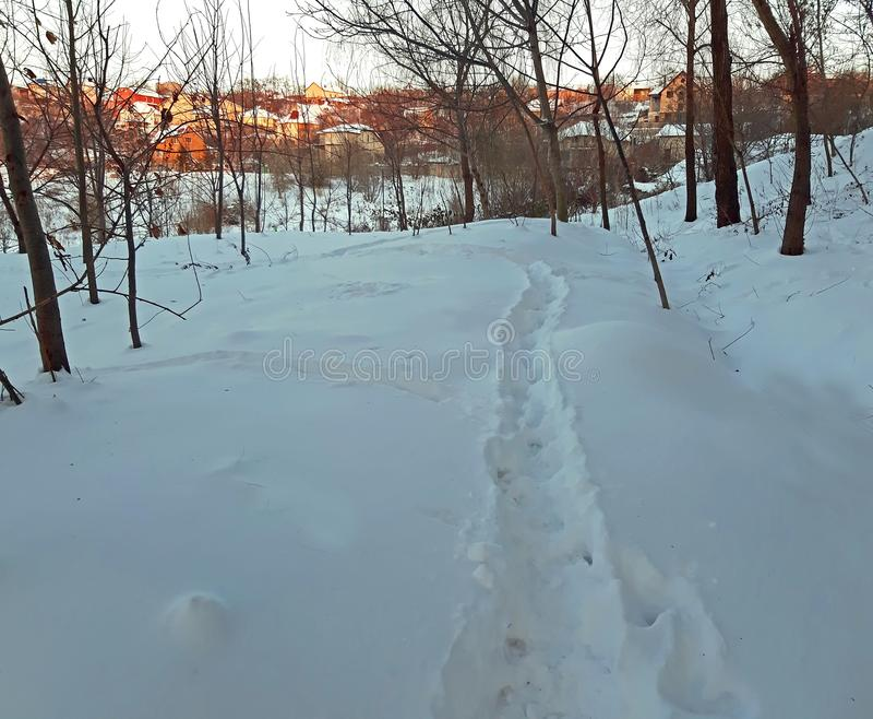 Empreintes de pas de chien dans la neige à la nature images stock
