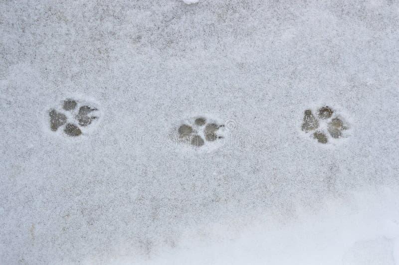 Empreintes de pas de chien dans la neige image stock