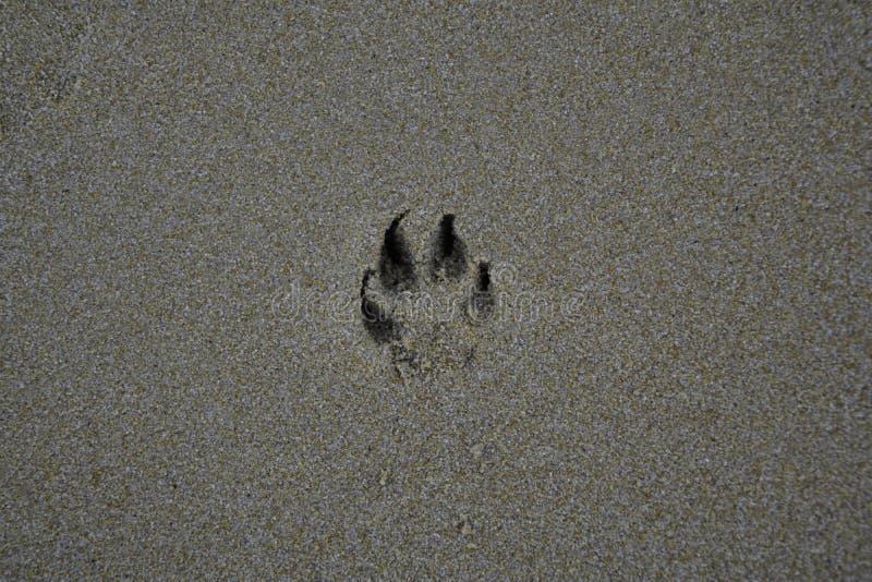 Empreintes de pas de chien sur le sable image stock