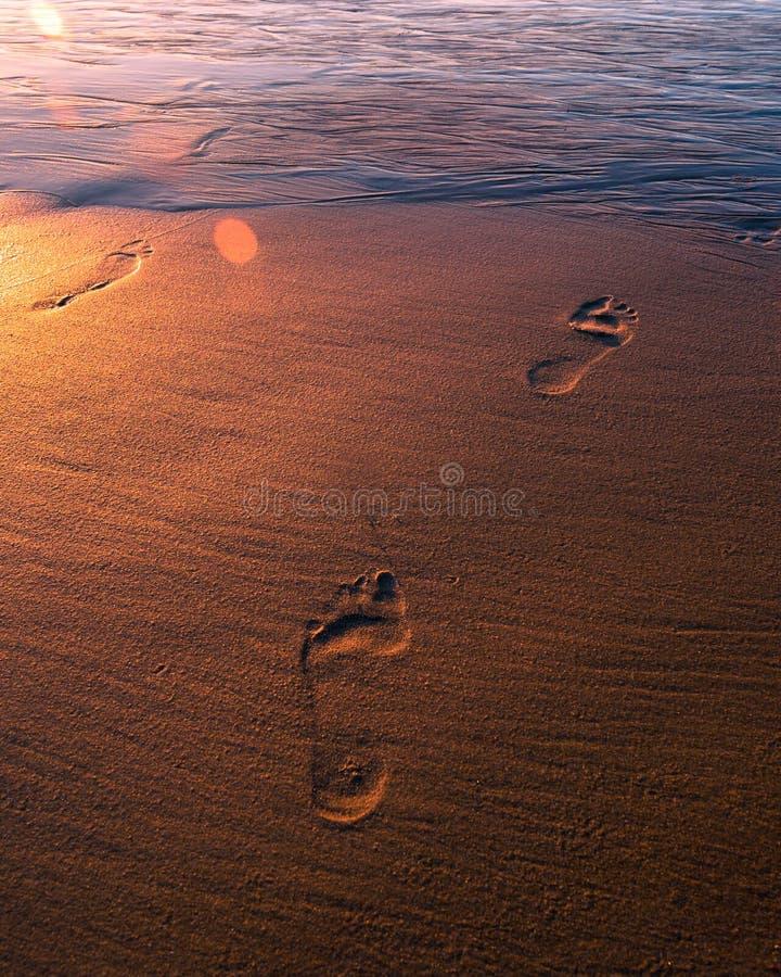 Empreintes de pas d'or dans le sable photos libres de droits