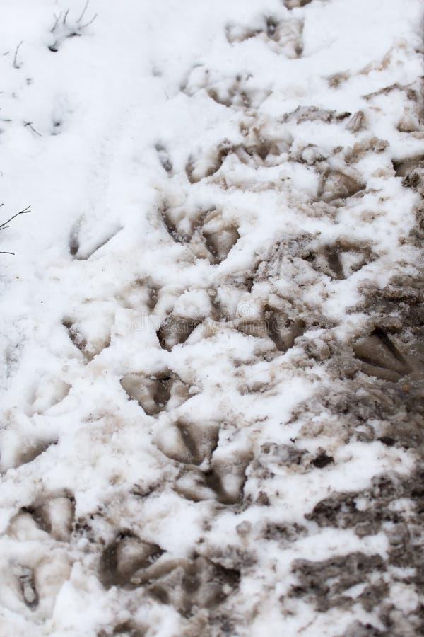 Empreintes de pas d'oie dans la neige comme fond images stock