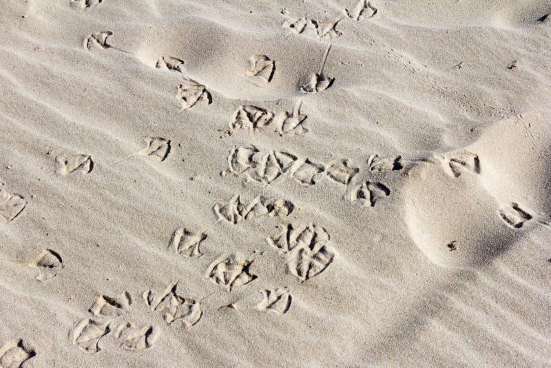 Empreintes de pas d'oiseau dans le sable images stock
