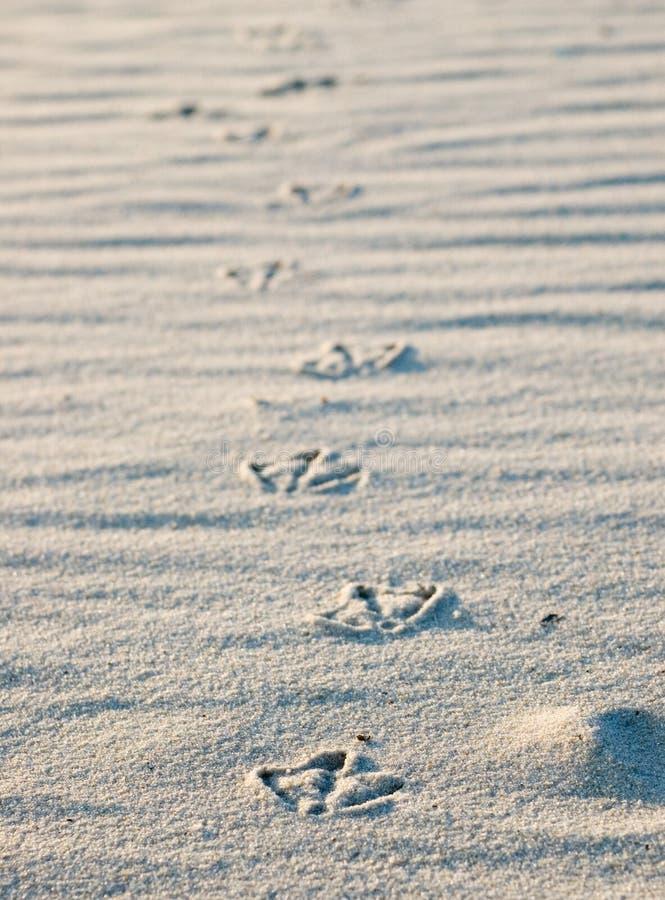 Empreintes de pas d'oiseau en sable images stock