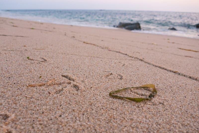 Empreintes de pas d'oiseau/mouette dans le sable sur la plage avec l'algue photos stock