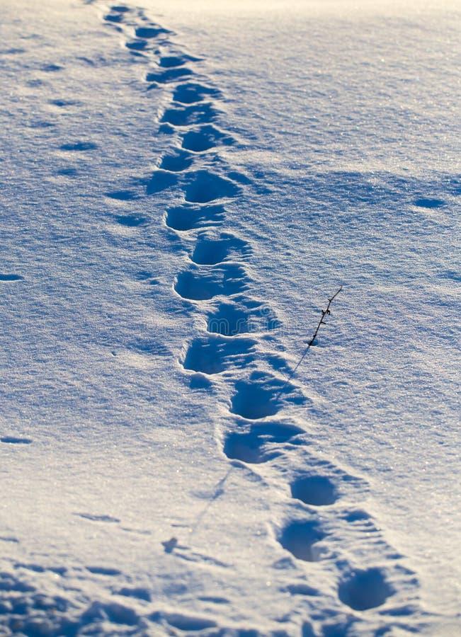 Empreintes de pas d'un chien dans la neige au coucher du soleil photos stock