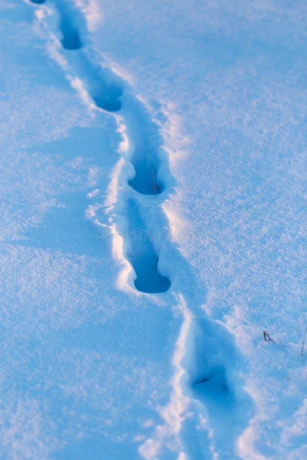 Empreintes de pas d'un chien dans la neige au coucher du soleil images libres de droits