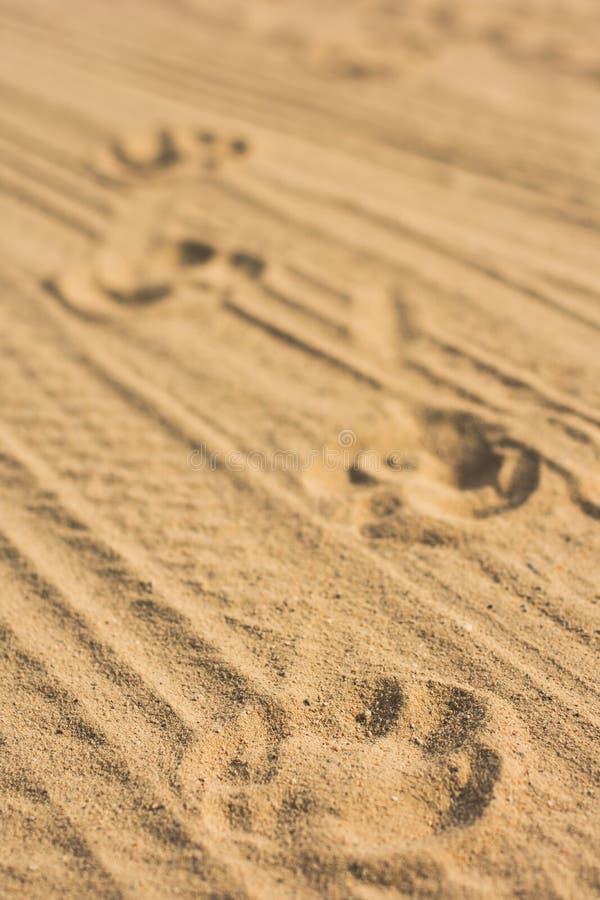 Empreintes de pas d'un chien et d'une voiture sur le sable photos stock