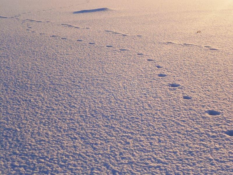 Empreintes de pas dans la neige image stock
