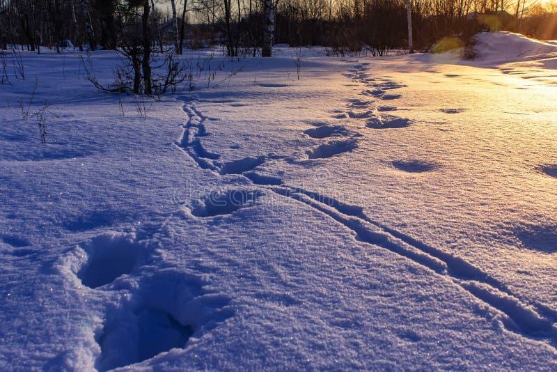 Empreintes de pas dans la neige au lever de soleil Horizontal de l'hiver photographie stock libre de droits