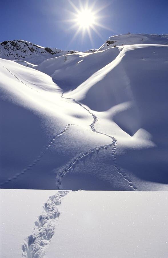 Empreintes de pas dans la neige profonde photos libres de droits