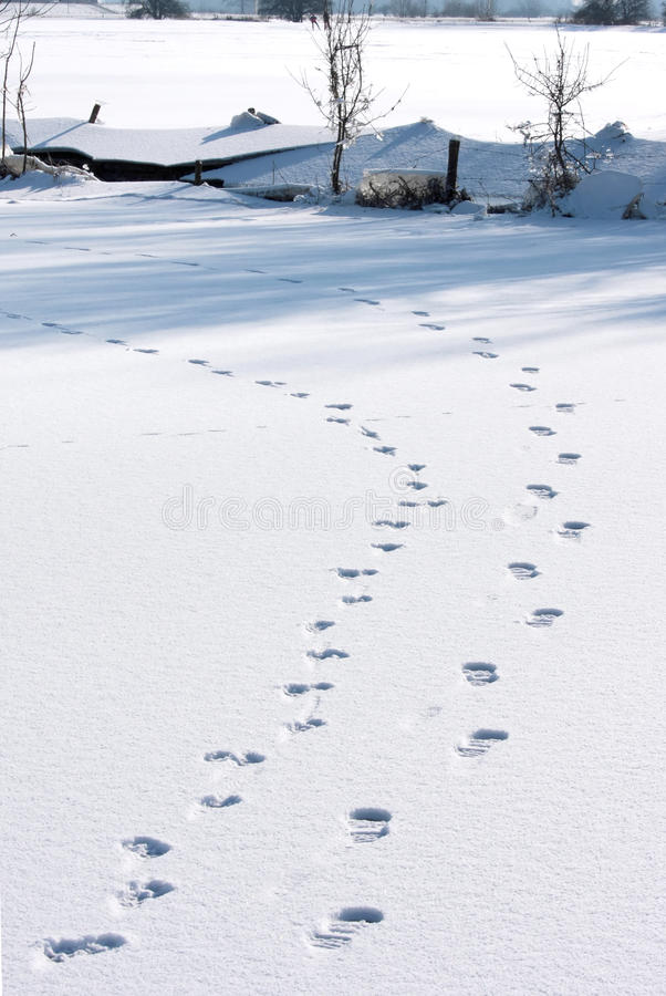 Empreintes de pas dans la neige sur la glace hollandaise images libres de droits
