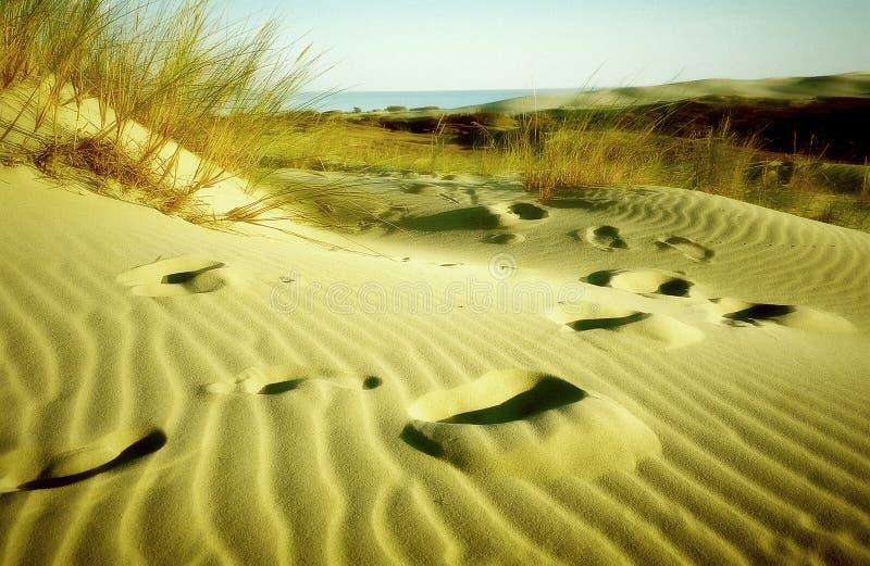 Empreintes de pas dans le sable images libres de droits