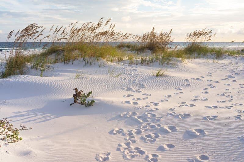 Empreintes de pas dans les dunes au coucher du soleil photos libres de droits