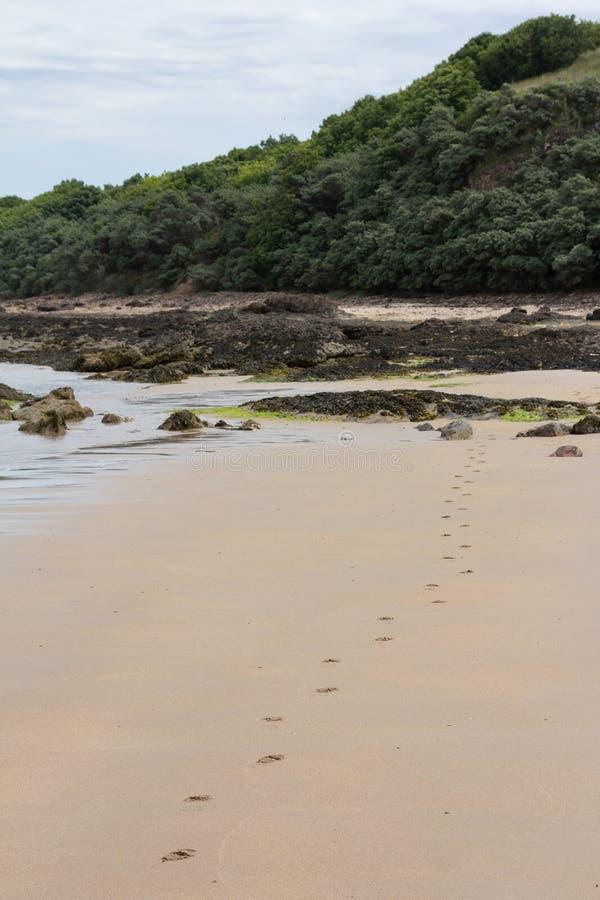 Empreintes de pas en sable photo stock