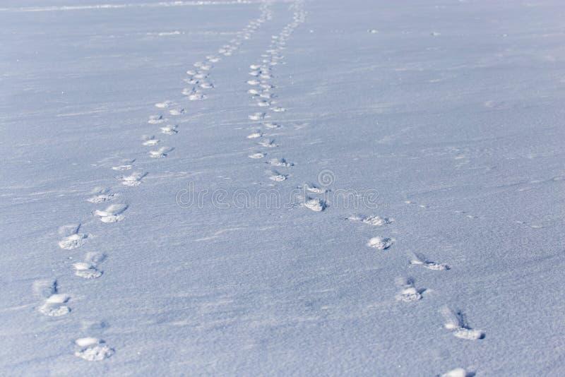 Empreintes de pas humaines sur la neige blanche comme fond images libres de droits