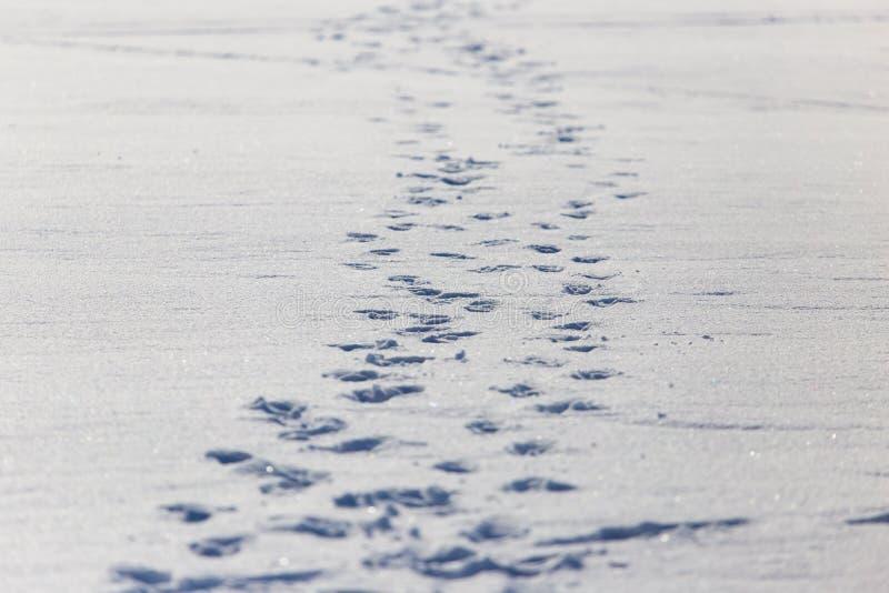 Empreintes de pas humaines sur la neige blanche comme fond photo stock