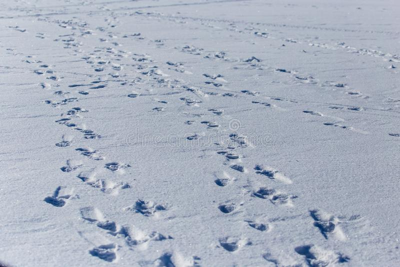 Empreintes de pas humaines sur la neige blanche comme fond image libre de droits