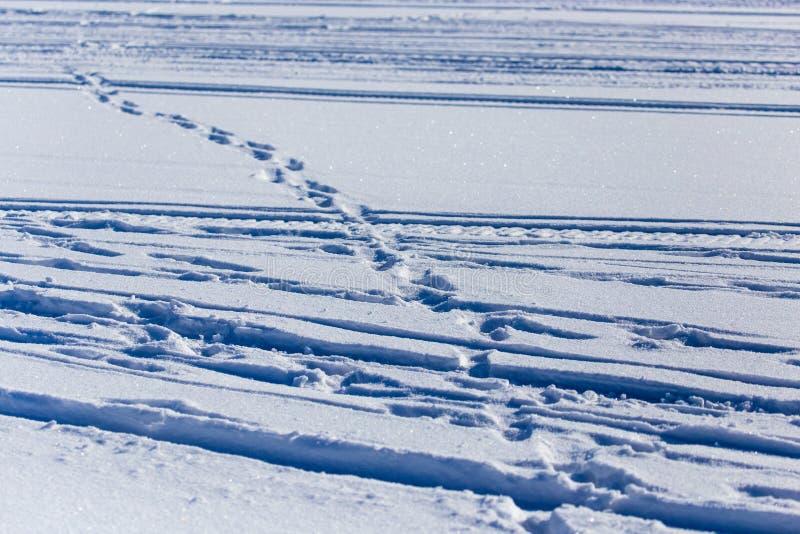 Empreintes de pas humaines sur la neige blanche comme fond image stock
