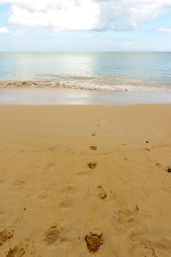 Empreintes de pas menant dans la mer photo libre de droits