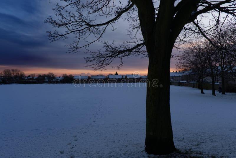 Empreintes de pas par un arbre d'hiver photographie stock libre de droits
