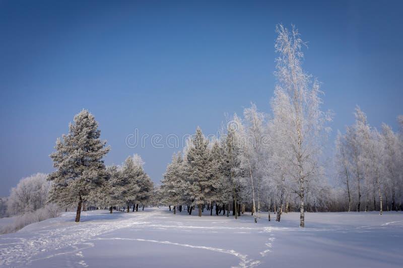 Empreintes de pas par un champ d'hiver couvert par neige images stock