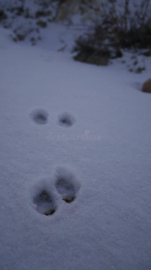 Empreintes de pas de petits animaux dans la neige photographie stock libre de droits
