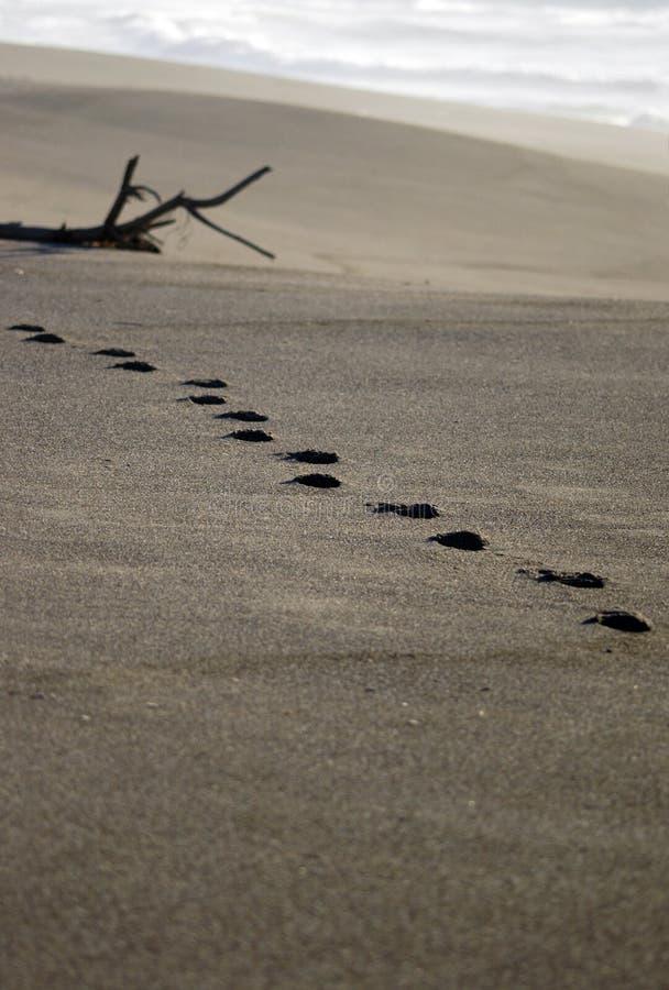 Empreintes de pas sur la plage éloignée photographie stock
