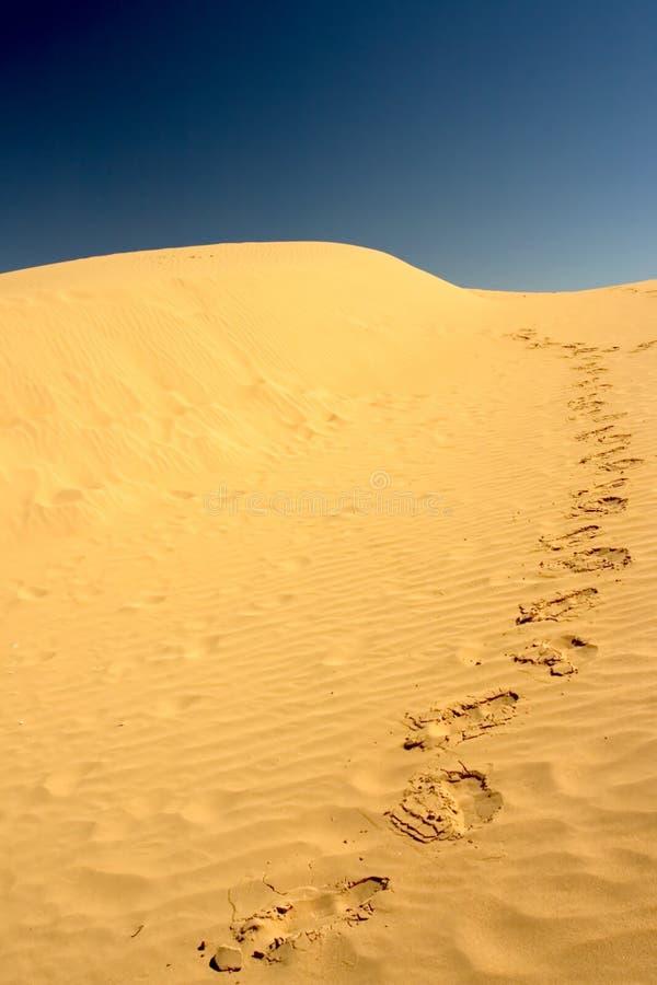 Empreintes de pas sur le désert image libre de droits