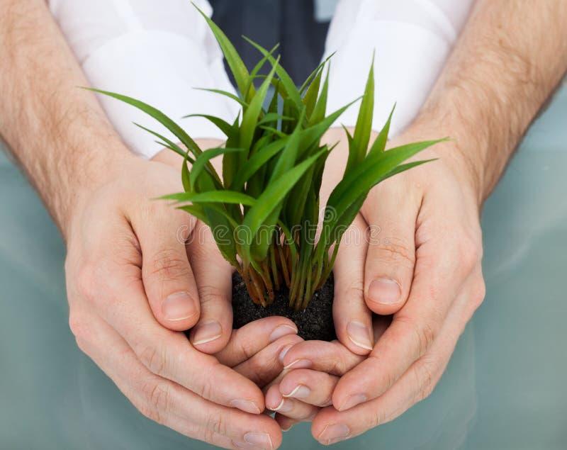 Empresários que guardam a planta nas mãos colocadas fotos de stock royalty free