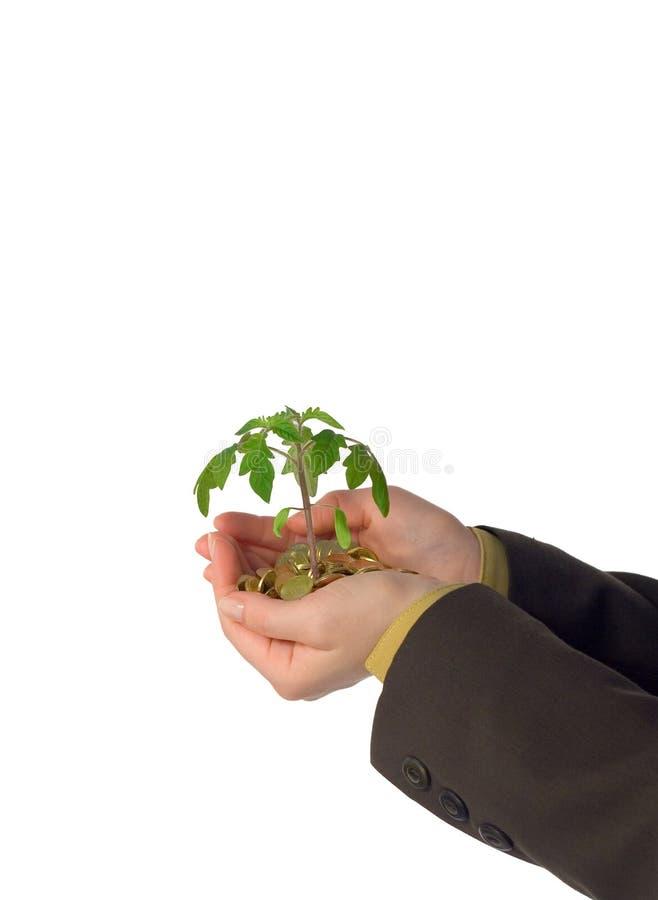 Empresa de pequeno porte emergente fotografia de stock royalty free