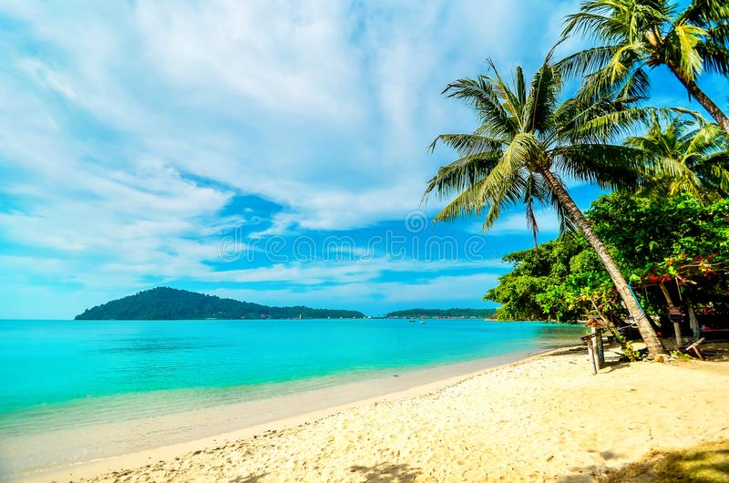 Empty beach with a palm tree on a tropical island. Vacation at the sea. stock photos