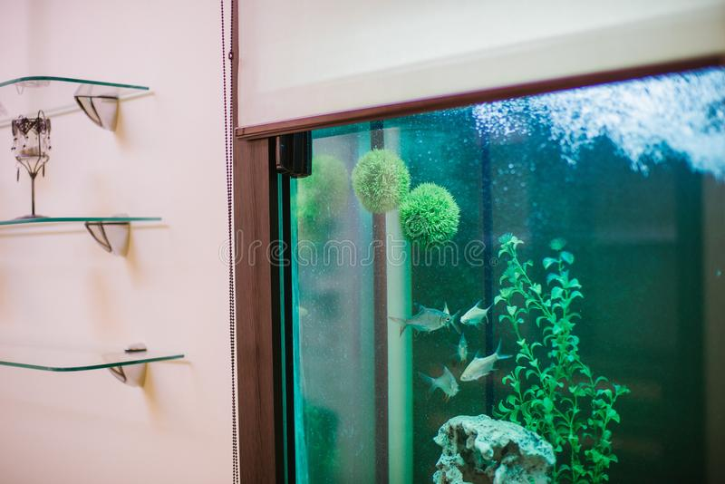 Empty beautiful room in day spa with aquarium and fish stock image
