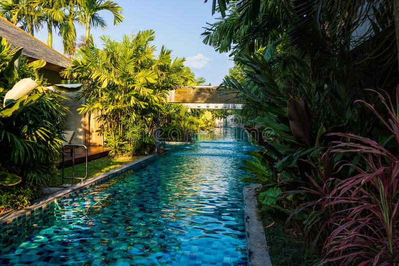 Empty, long swimming pool with fountain, surrounded by palm trees in the tropical jungle royalty free stock image