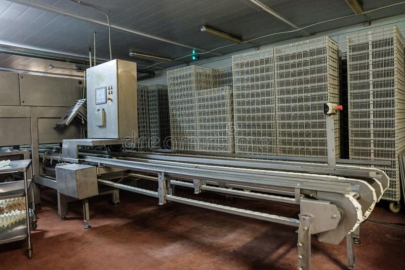 Empty belt conveyor for counting and sorting chicks stock photo