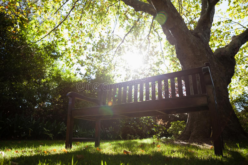 Empty bench against trees on field in backyard. During sunny day stock image