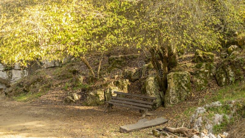 Empty bench at Arcotete park, Chiapas, Mexico stock images