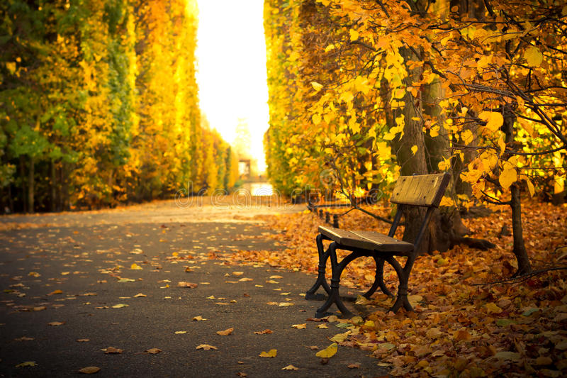 Empty bench in beautiful yellow park scenery royalty free stock image