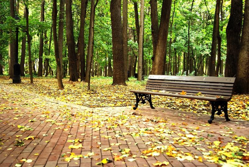 An empty bench in a forest royalty free stock image