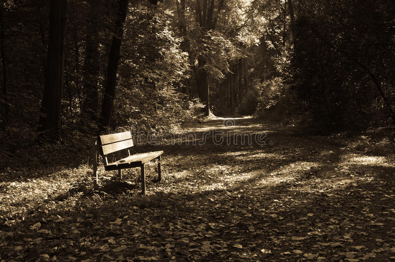Download EMPTY BENCH stock photo. Image of quiet, peace, lonesome - 34231640
