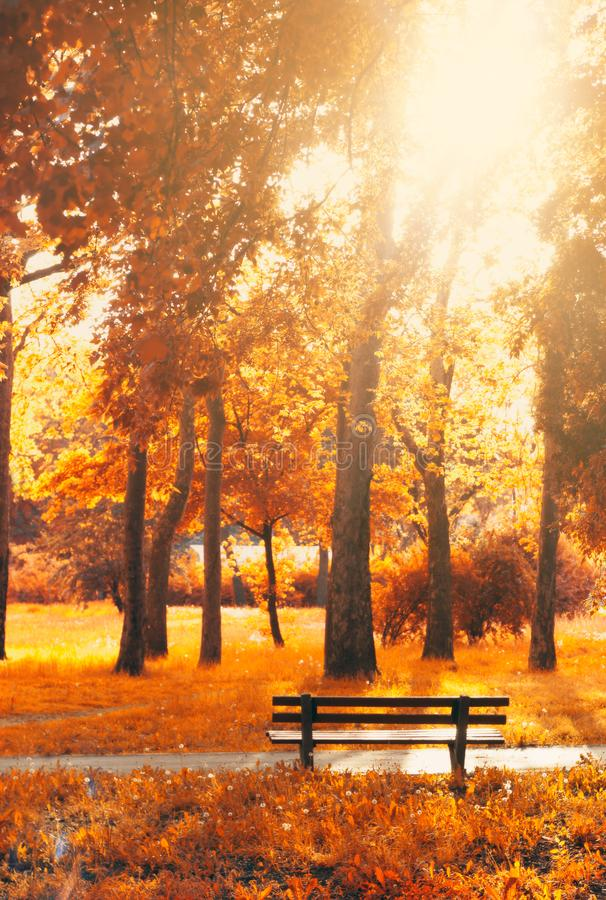 Empty bench in the park, in autumn golden and yellow colors; autumn background. Empty bench in the park, in fantasy autumn golden and yellow colors; fantasy stock photos