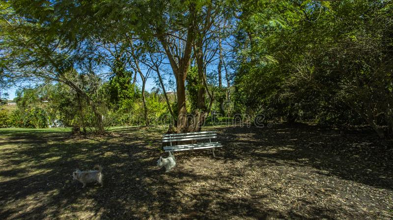Empty bench under tree. Good weather in morning with trees royalty free stock photography