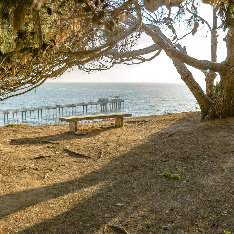 Empty bench under a tree overlooking Scripps Pier stock images